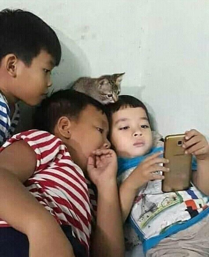momen sok asik kucing Instagram
