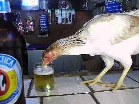 dijahili ayam Berbagai Sumber