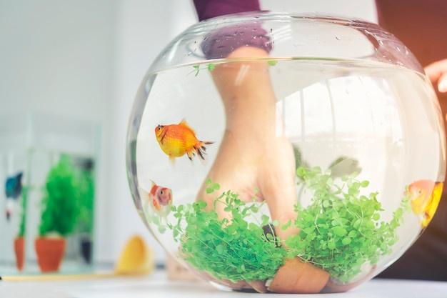 Cara membuat aquascape © 2020 brilio.net