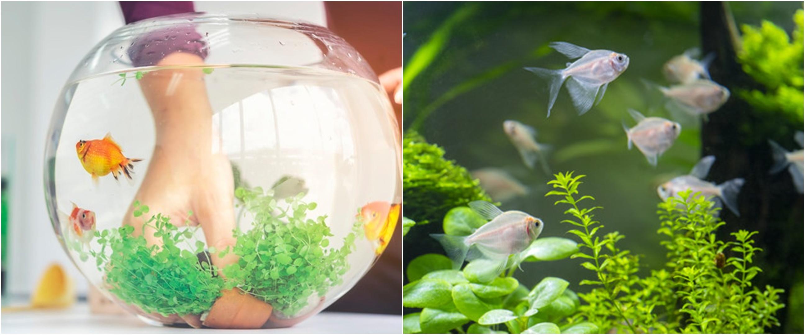 7 Cara membuat aquascape untuk pemula, mudah dan murah
