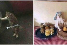 20 Potret kucing bekerja layaknya manusia, menggemaskan