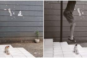Viral lelaki terlihat mau injak kucing, endingnya bikin tepuk jidat