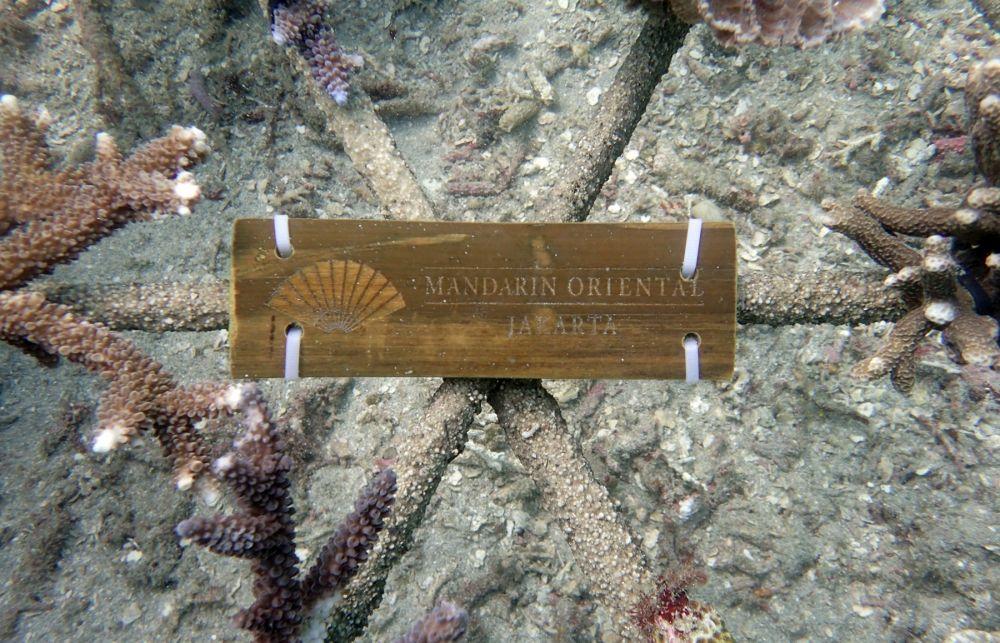 Mandarin terumbu karang © 2020 brilio.net