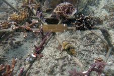 Hotel ini gelar aksi penataan kembali dan perlindungan terumbu karang