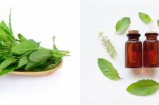 10 Manfaat daun kemangi untuk kesehatan, turunkan gula darah