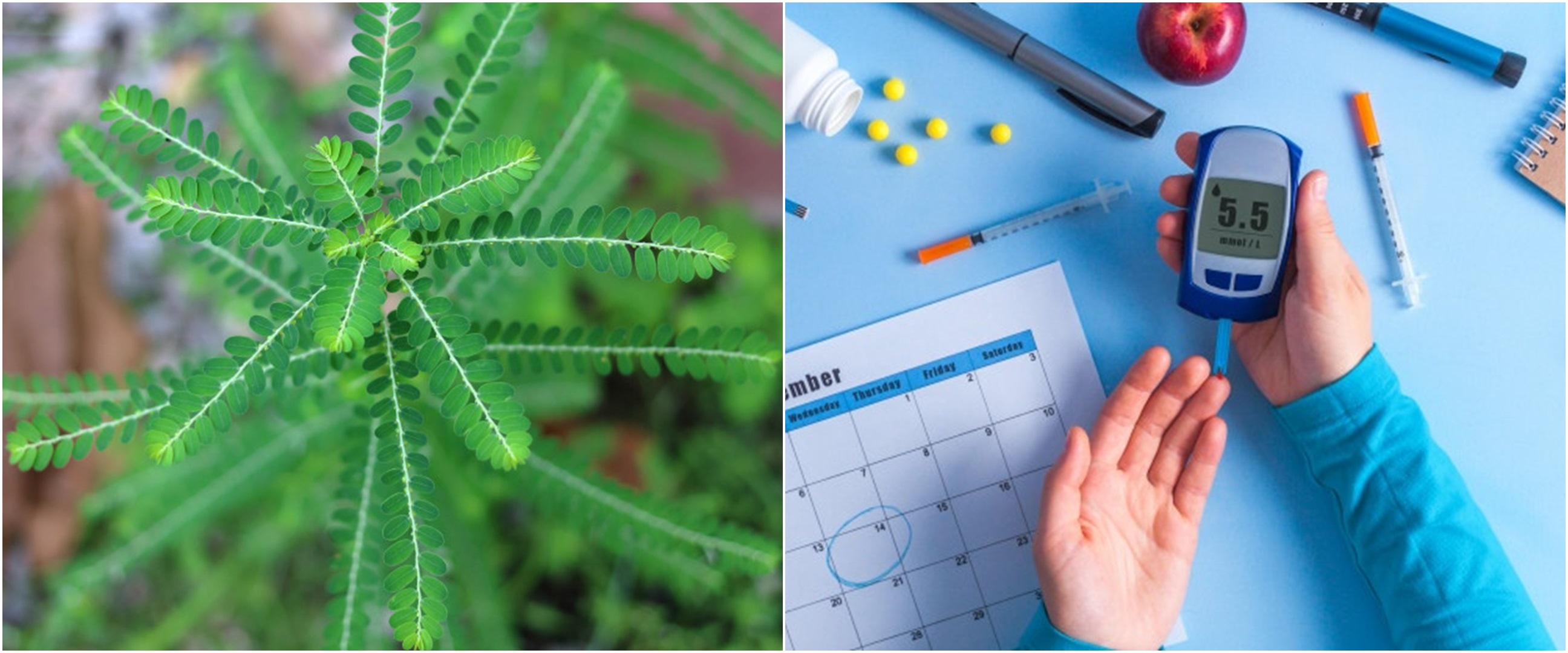 9 Manfaat daun meniran bagi kesehatan, atasi diabetes hingga kanker