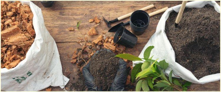 7 Jenis tanaman obat tradisional cocok ditanam di rumah & manfaatnya