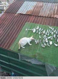 hewan mukbang Berbagai sumber