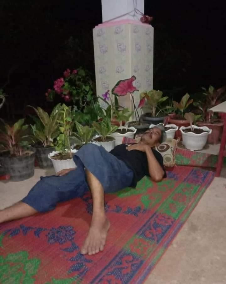 telanjur cinta tanaman hias © Berbagai sumber