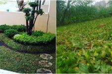 7 Cara menanam rumput gajah mini di halaman rumah dengan mudah