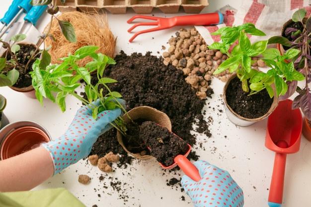 Cara menanam jahe di rumah © 2020 brilio.net