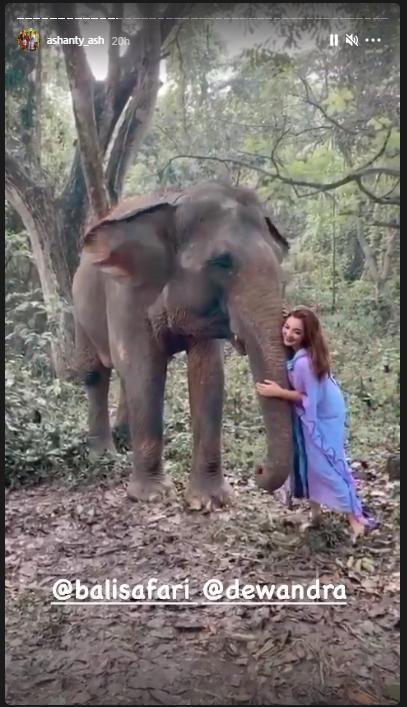 pemotretan Ashanty dengan gajah © 2020 brilio.net/ Instagram