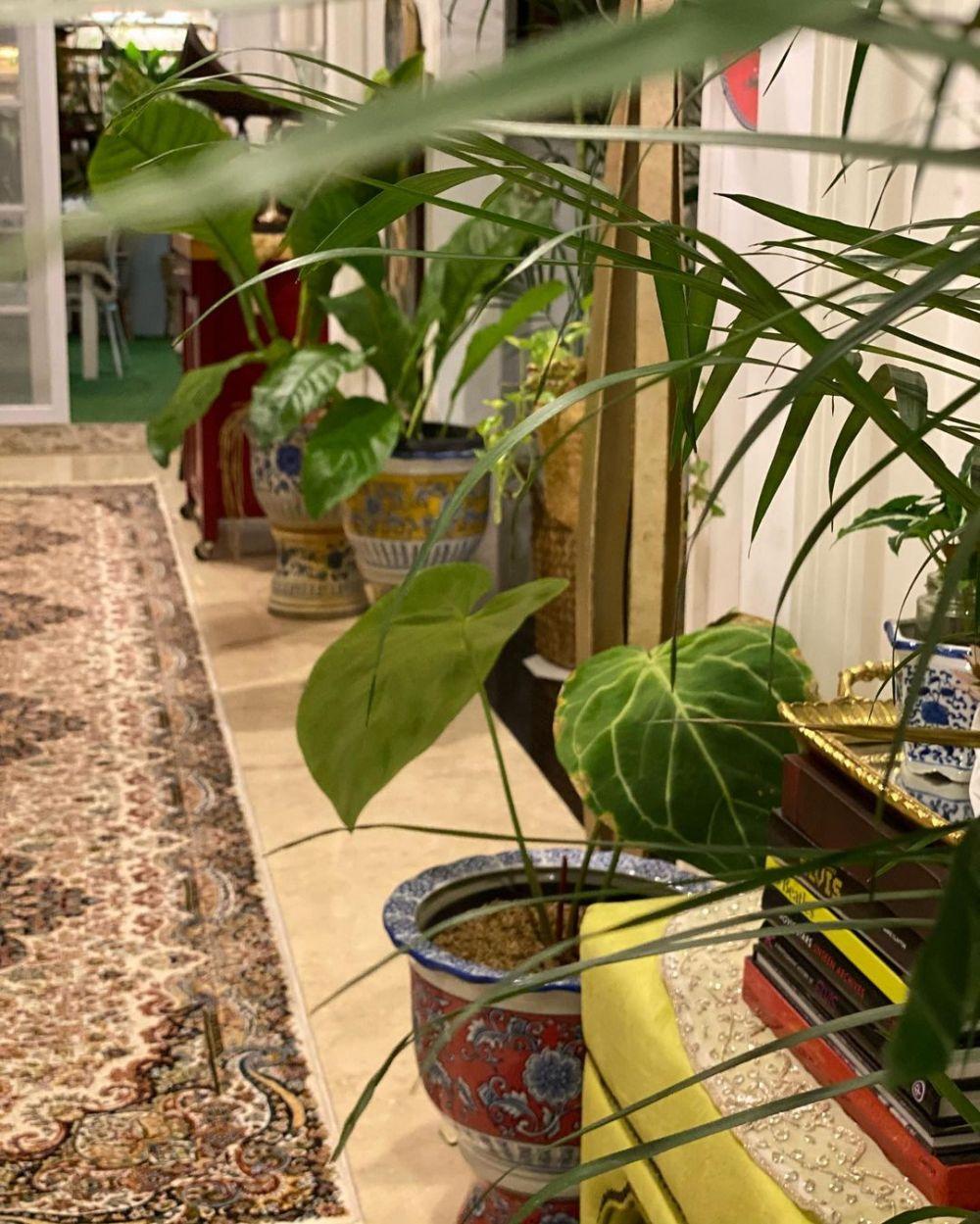 tanaman hias Yuni Shara © 2020 brilio.net/ Instagram