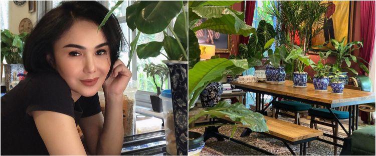 10 Potret koleksi tanaman hias Yuni Shara, asri dan rapi
