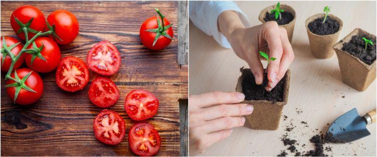 7 Cara menanam tomat di pot, mudah tumbuh dan hemat tempat