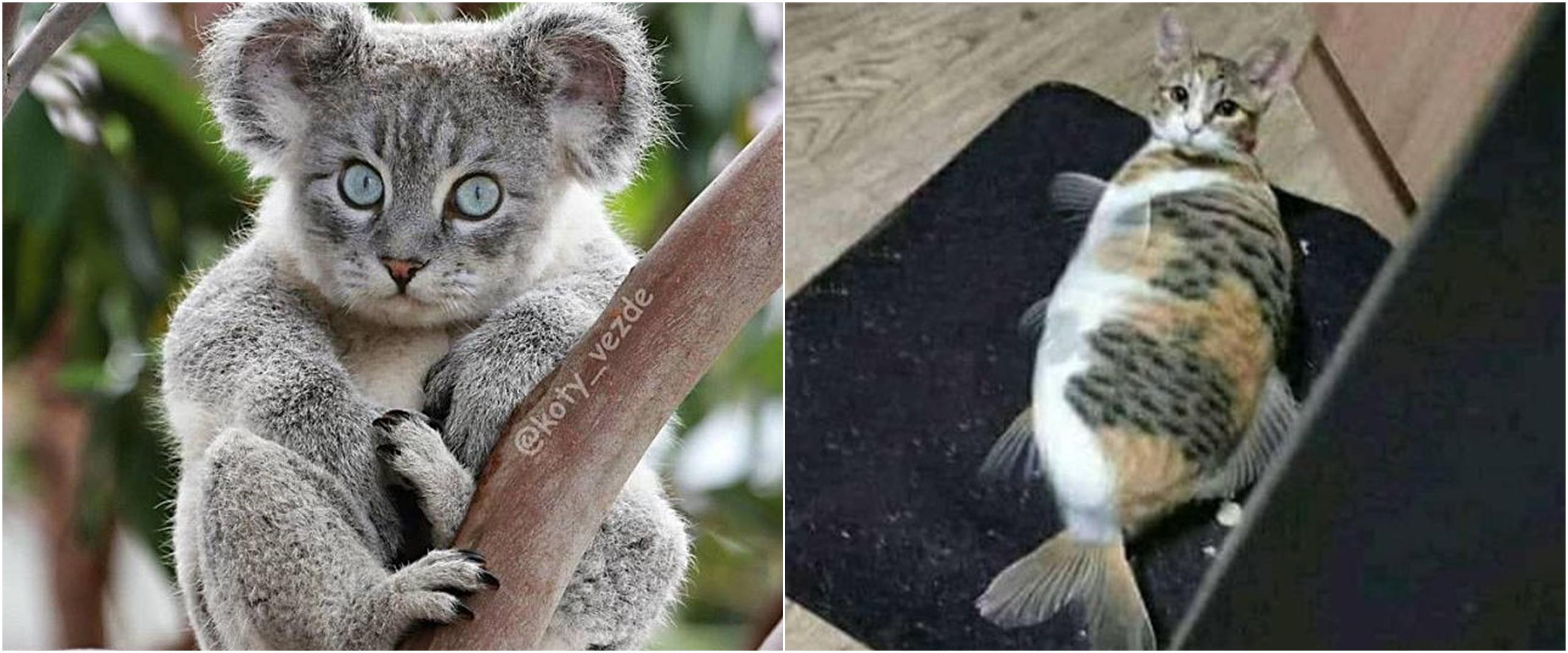10 Editan potret kucing disatukan dengan hewan lain, bikin tepuk jidat