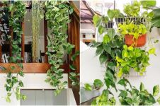 10 Jenis tanaman hias gantung untuk dekorasi, bikin rumah jadi cantik