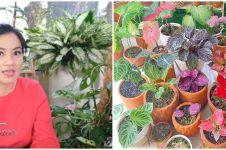 10 Potret koleksi tanaman hias Titi Kamal, harganya bikin melongo