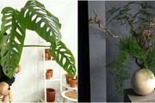 10 Jenis tanaman hias indoor, bantu percantik ruangan dalam rumah