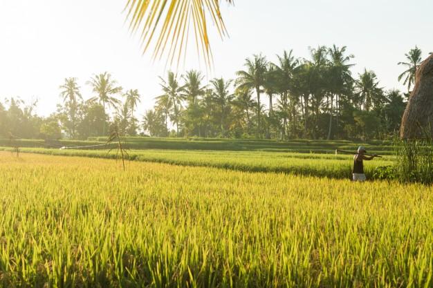 Kata-kata Caption keindahan alam sawah freepik.com