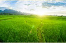 30 Kata-kata caption keindahan alam sawah, menyejukkan hati