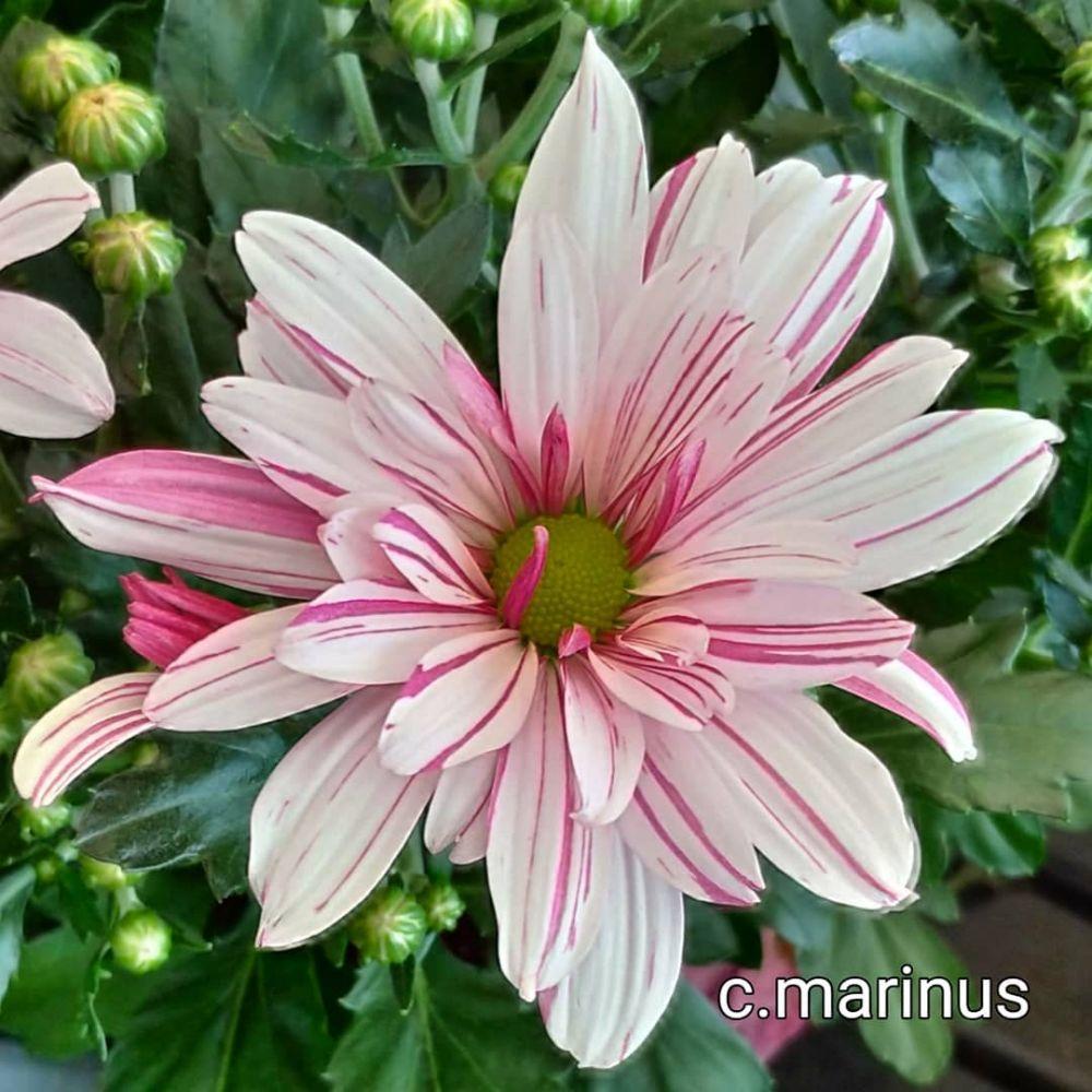 Jenis tanaman hias pembersih udara © 2020 brilio.net