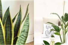 10 Jenis tanaman hias pembersih udara, bikin rumah bebas racun