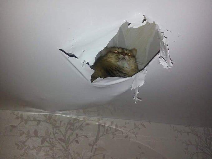 penampakan di atap rumah © Berbagai Sumber