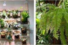 10 Jenis tanaman cocok untuk vertical garden, tahan sinar matahari