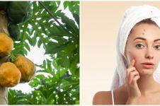 17 Manfaat daun pepaya untuk kecantikan dan kesehatan, atasi jerawat