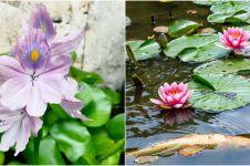 10 Jenis tanaman air penghias kolam ikan, cantik dan mudah dirawat