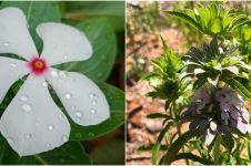 10 Jenis tanaman pengusir serangga, bisa sekaligus penghias ruangan