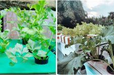 10 Jenis tanaman sayur hidroponik, tak butuh lahan luas & cepat panen