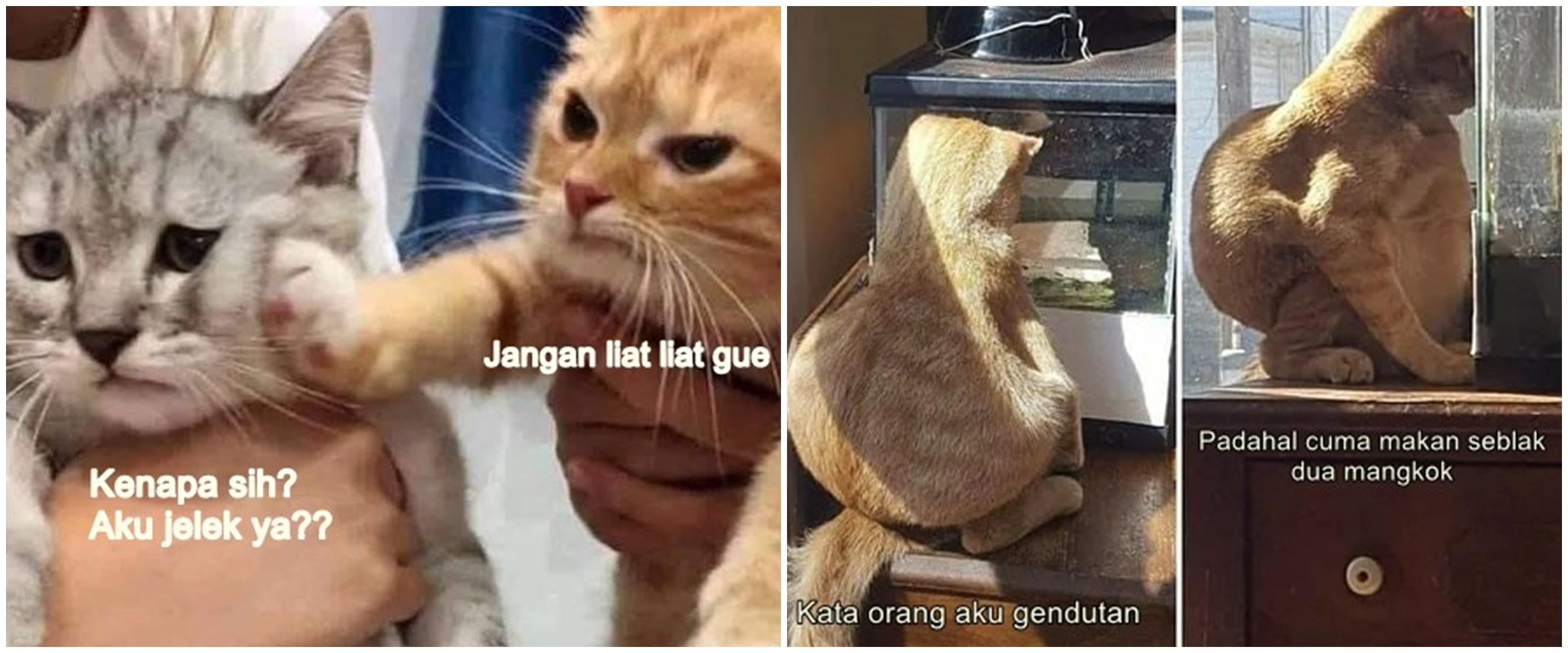 10 Meme lucu kucing insecure ini bikin senyum lebar