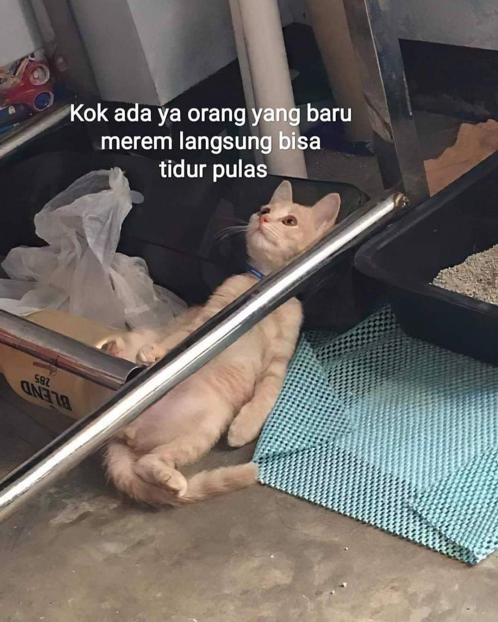 meme kucing insecure © Berbagai Sumber