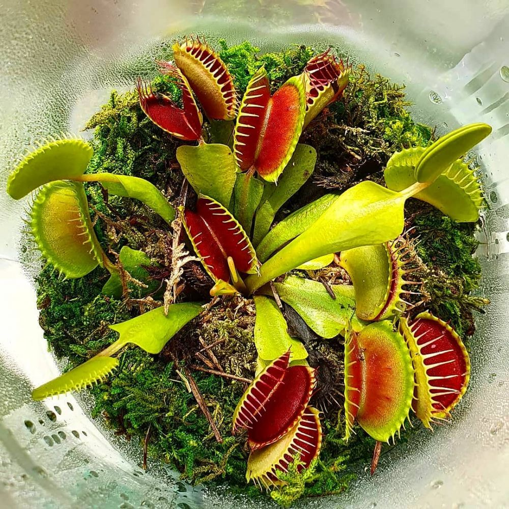 Jenis tanaman karnivora © 2021 brilio.net