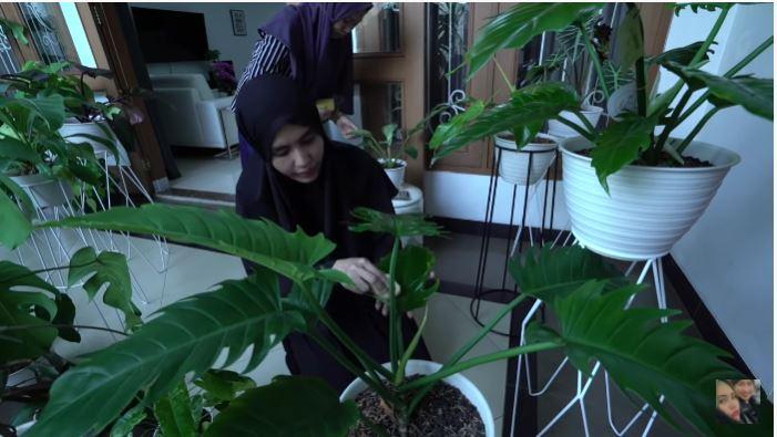 tanaman Kartika Putri © Instagram