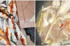 Aksi nyeleneh warganet masak ikan koi jadi sup ini bikin melongo