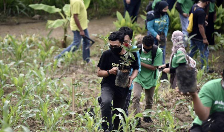 4 Fakta aksi Siap Darling di masa pandemi, tanam 5.225 bibit pohon