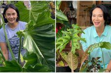 8 Potret koleksi tanaman Dian Nitami, kuping gajahnya curi perhatian