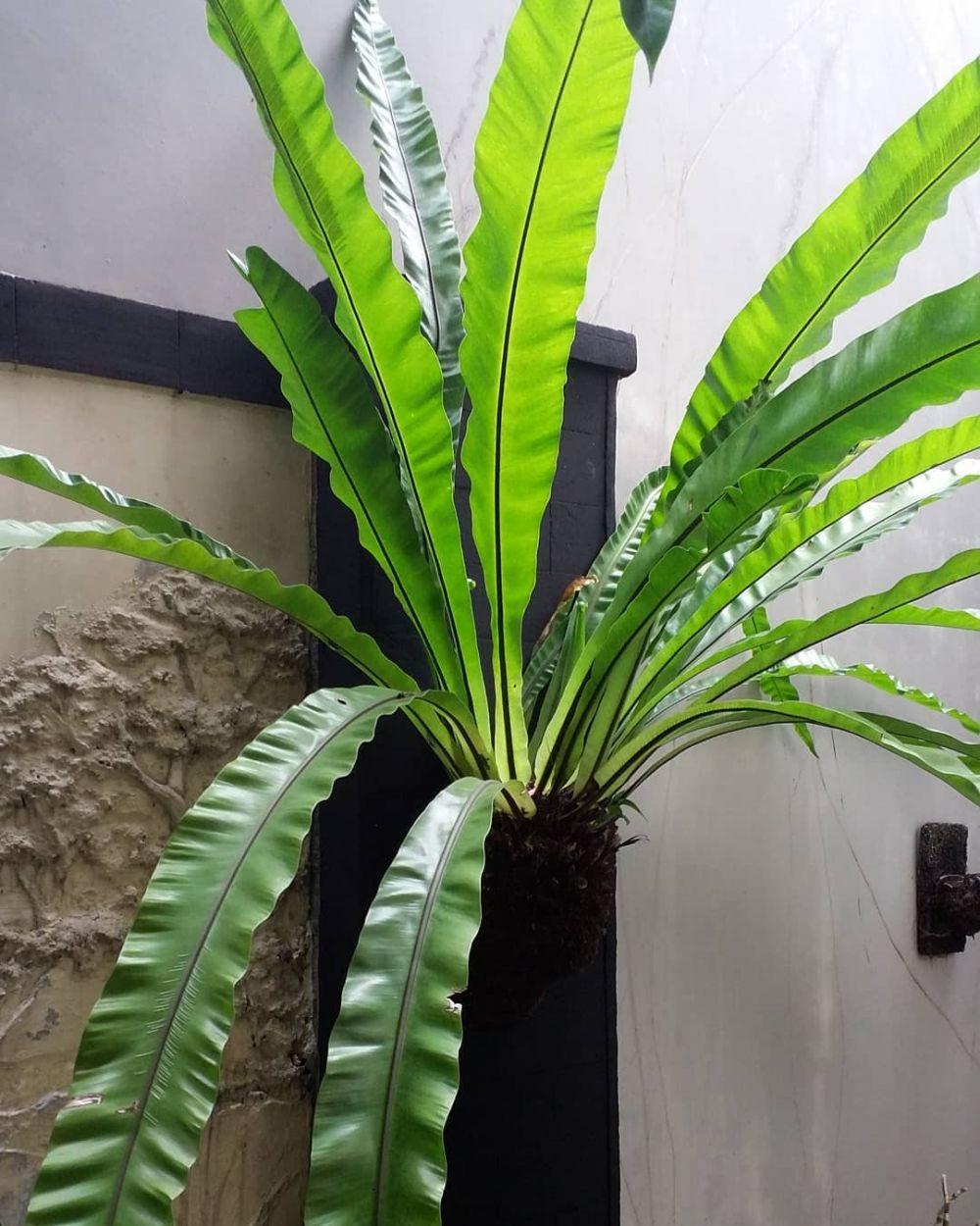 tanaman gantung indoor © Instagram