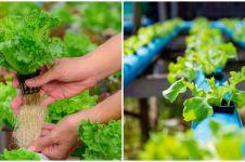 5 Alat untuk menanam dengan metode hidroponik, lengkap dengan caranya