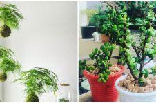 10 Jenis tanaman hias daun kecil, cantik dan mudah dirawat
