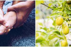 7 Tanaman obat asam urat dan cara menggunakannya