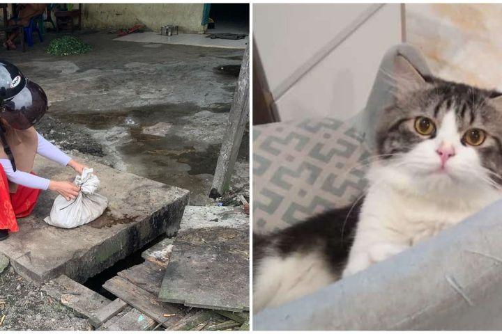 Viral cerita wanita temukan kucing peliharaannya mati termutilasi