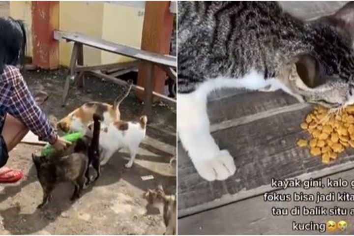 Viral wanita rawat puluhan kucing korban banjir, inspiratif