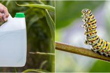 8 Obat pembasmi hama tanaman hias, alami dan buat tanaman lebih subur