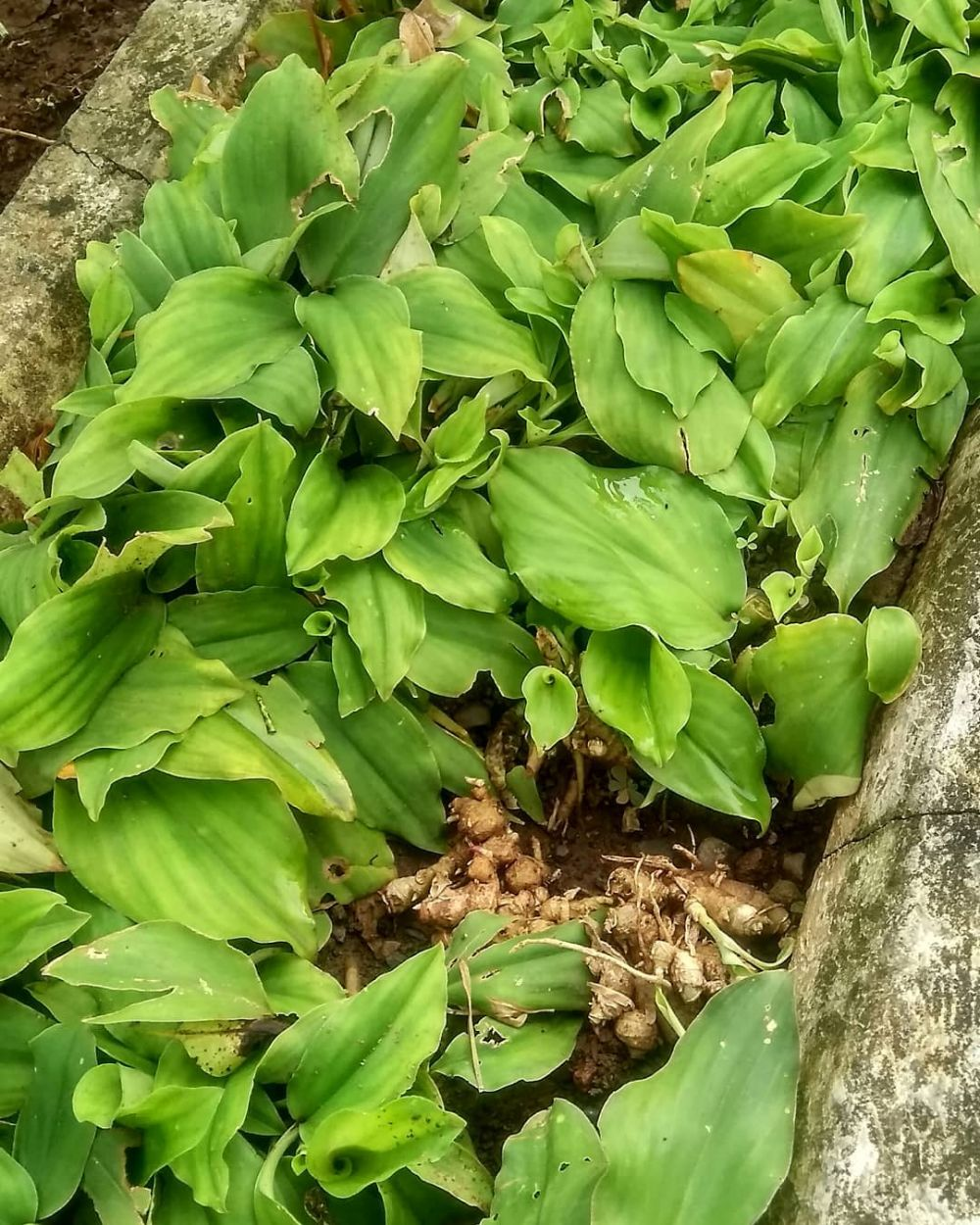 Jenis tanaman obat jenis Freepik, Instagram © 2021 brilio.net
