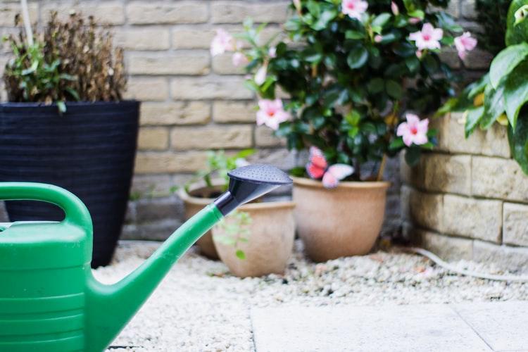 The benefits of aglonema flowers at home © Istimewa