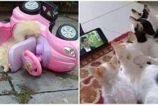 10 Kelakuan nyeleneh kucing pas pakai barang manusia, ada-ada aja
